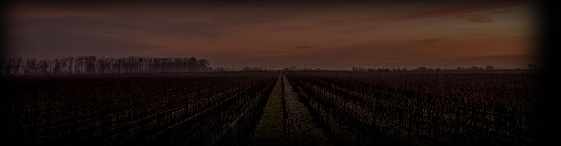 Vinos Premium
